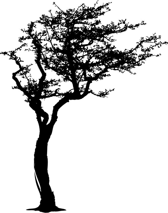 drzewo na wietrze naklejkolandia. Black Bedroom Furniture Sets. Home Design Ideas